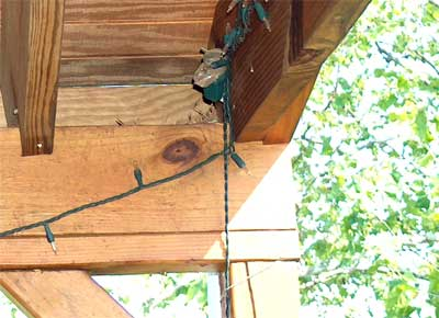 Bluebird nesting under porch. Photo by Bill Ebert