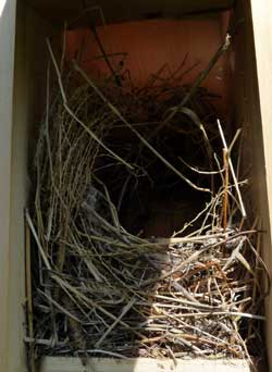 HOSP nest in box