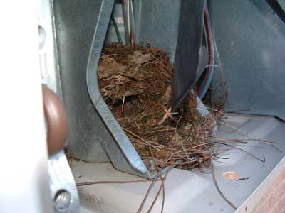 Titmouse nest in fan. Photo by Chris Asmann.