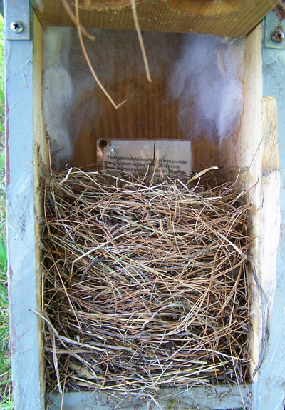 EABL nest in two-holed box. Photo by Bet Zimmerman.