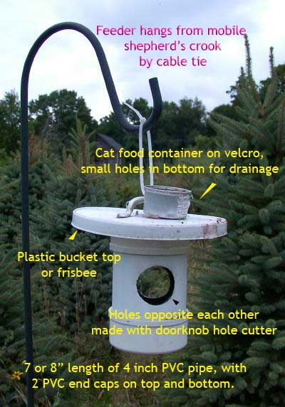 Simple mealworm feeder.  Photo by Bet Zimmerman