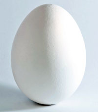 chicken egg. Wikimedia Commons photo.